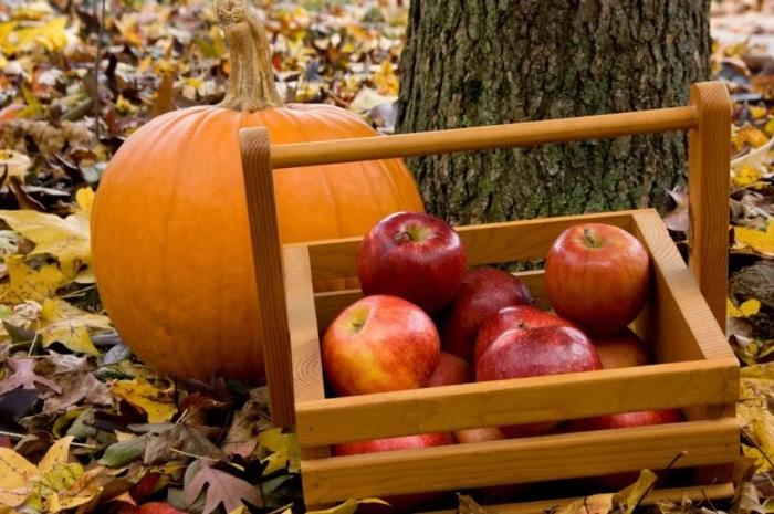 У тыкв и яблок разный срок хранения. /Фото: washingtonian.com