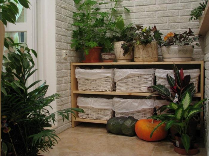 Большое количество растений превратят балкон в домашние джунгли. /Фото: img.aviarydecor.com