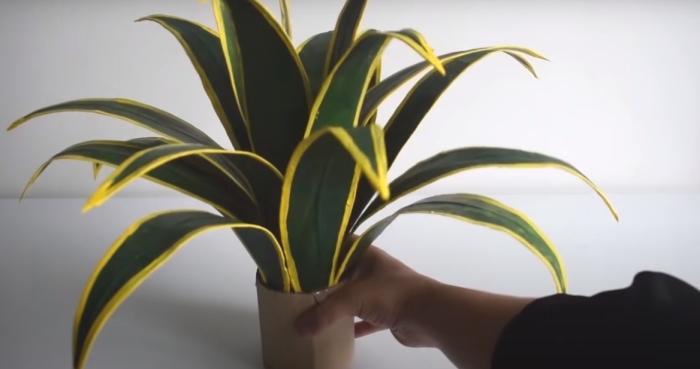 В офисе или в плохо освещенном помещении такое растение точно лишним не будет. /Фото: https://www.youtube.com/watch?v=_2hrSYiYPUM