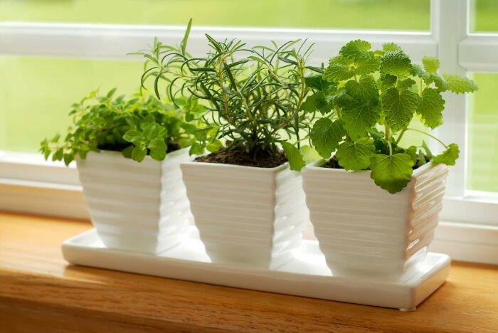 Не нужно сильно обрезать ветки растения, иначе оно погибнет. /Фото: hozyain.by