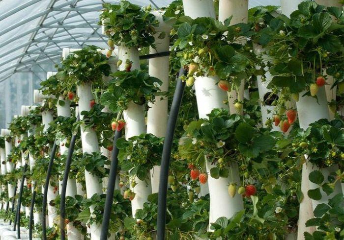С таким размещением можно наслаждаться урожаем самой сочной и вкусной клубники. /Фото: i.pinimg.com