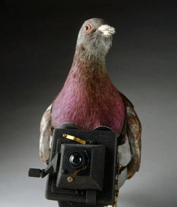 И мирно пролетающая мимо птичка могла быть агентом разведки. /Фото: thesun.co.uk