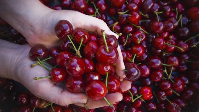С поеданием черешни следует проявить осторожность. /Фото: ivaroz.com