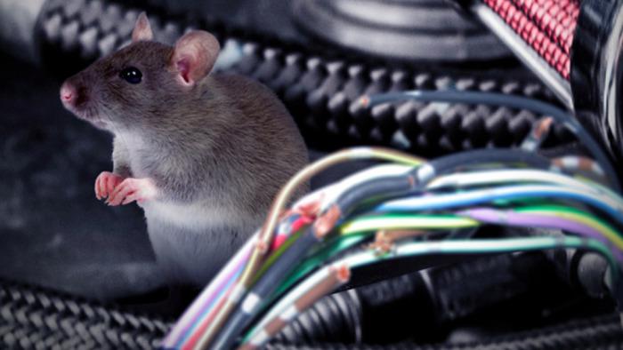 Чтобы не пускать в дом мышей, нужно качественно закрыть все отверстия в стенах. /Фото: ic.pics.livejournal.com
