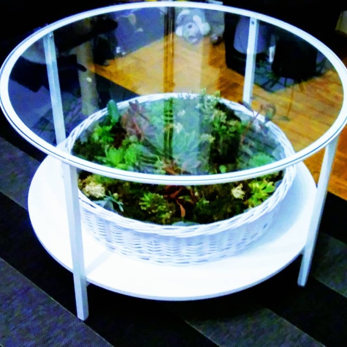 Столик со стеклянной столешницей можно легко превратить в флорариум. /Фото: instagram.com