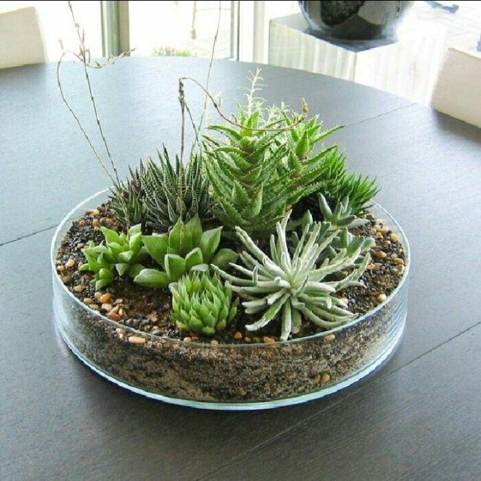 Почва — простой выбор для посадки суккулентов. /Фото: i.pinimg.com