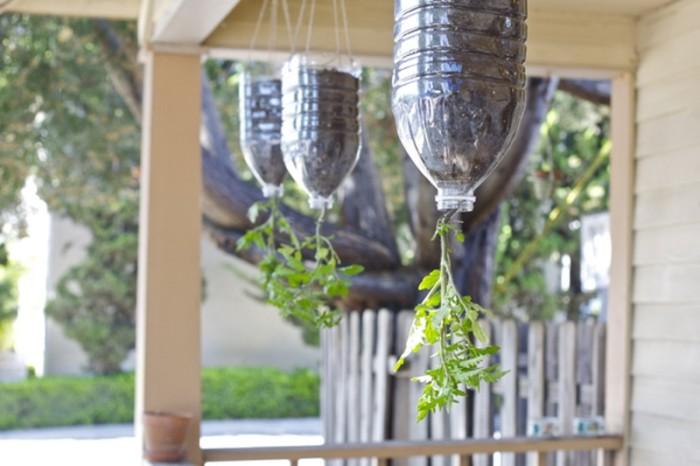 Перевернутые помидоры — оригинальное украшение для балкона и польза для желудка. /Фото: images.kienthuc.net.vn