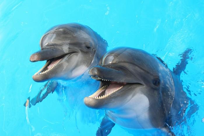 Дельфинов неумолимо тянет в правую сторону. /Фото: edinstvennaya.ua