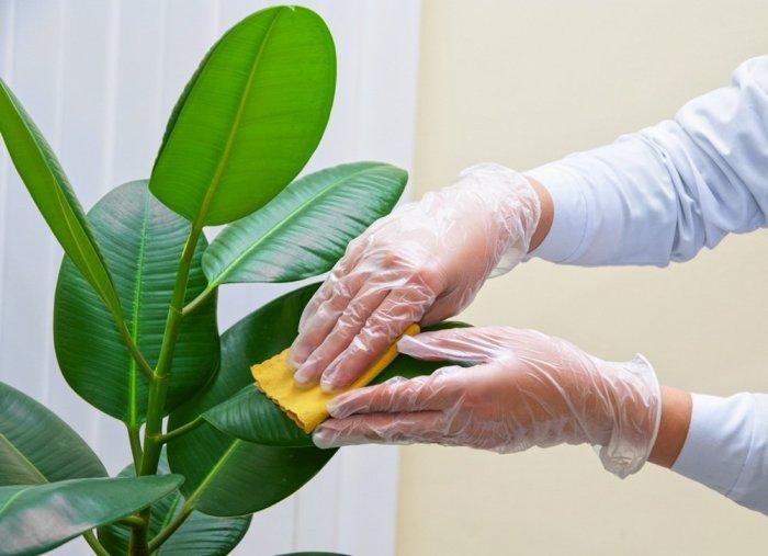Майонез поможет растениям и придаст листьям приятный красивый блеск. /Фото: maid.com