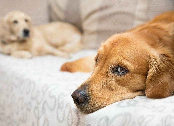 Изоляция домашних животных — одно из правил для успешного показа квартиры. /Фото: s3-production.bobvila.com