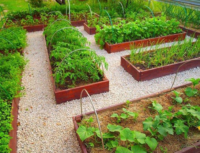 Сколько солнечного света нужно для выращивания овощей — информация, без которой не вырастить хороший урожай. /Фото: botanichka.ru