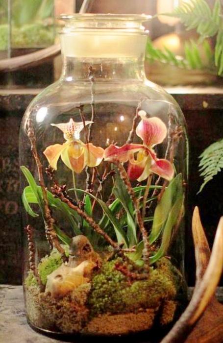 Красивый орхидариум. /Фото: cdn.mapme.club