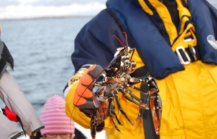Морепродукты способны вдвое уменьшить риск сердечных заболеваний. /Фото: farm2.static.flickr.com