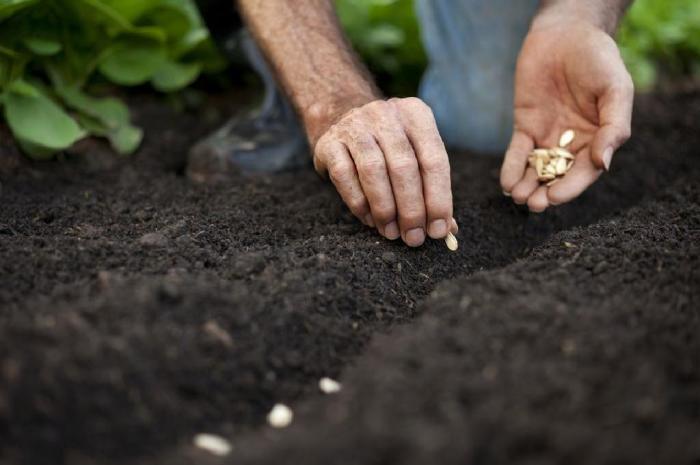 Полезное напоминание о том, когда какие семена сажать. /Фото: isrv.insterne.com