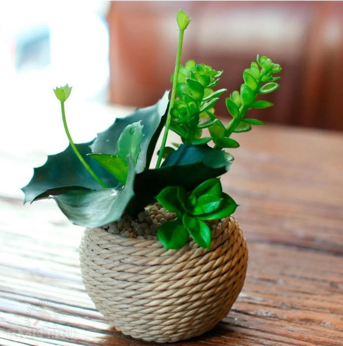 Органичное сочетание с любыми цветами и растениями. /Фото: avatars.mds.yandex.net
