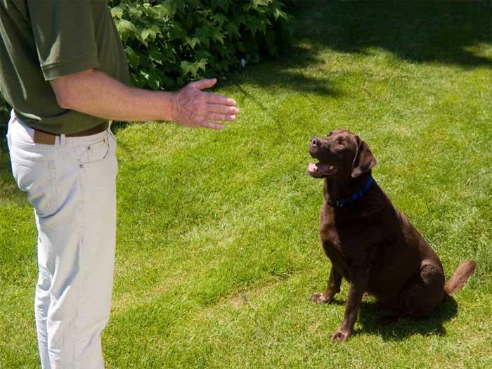 Гремящая банка может помочь отучить собаку поднимать еду с земли. /Фото: deltaonecanines.co.uk