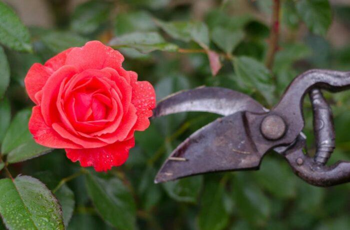 Важно не только правильно обрезать, но и сделать все необходимые этапы. /Фото: bestlandscapeideas.com