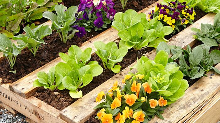 На грядке из поддонов можно выращивать и цветы, и огородные культуры. /Фото: images.ctfassets.net