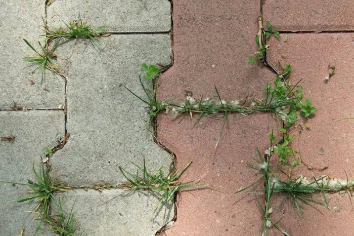 Избавиться от травы между плиткой поможет сода. /Фото: trotuar.biz