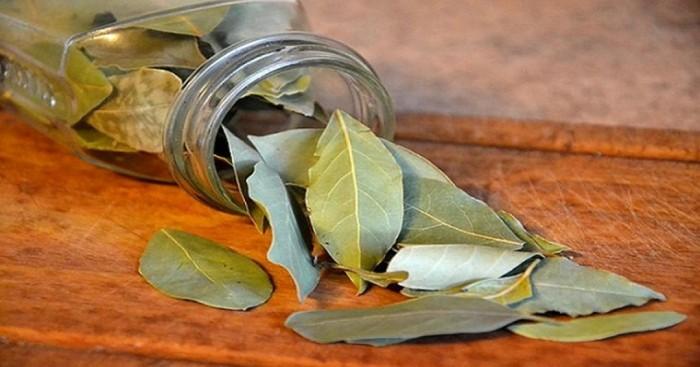 Пахучий лавровый лист поможет избавиться от тараканов в доме. /Фото: cdn1.dailyhealthpost.com