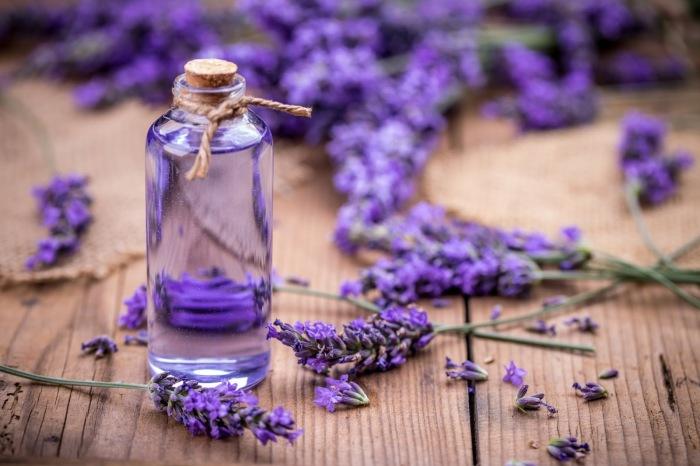 Лавандовый аромат очень приятен. /Фото: 1.bp.blogspot.com