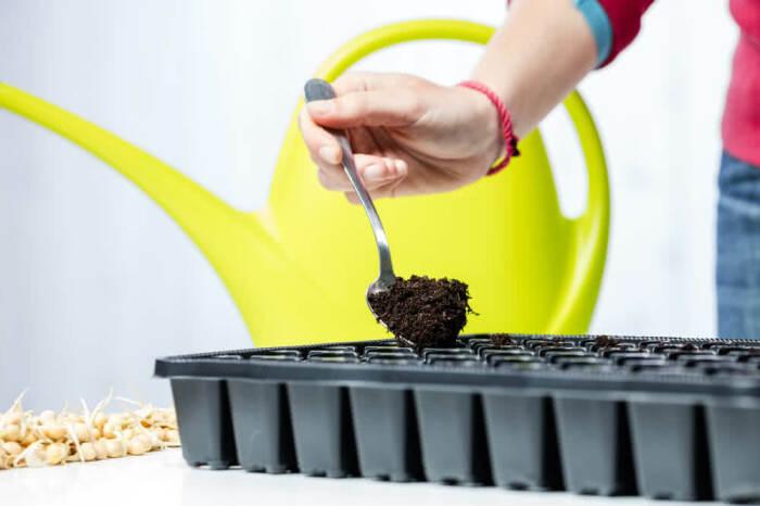 Почва для рассады должна быть свежей и обеззараженной. /Фото: ugaoo.com