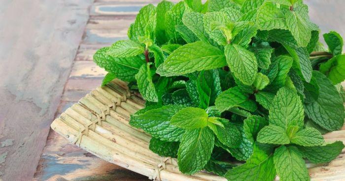 Пахнет приятно, но эффективно отгоняет комаров. /Фото: adevarul.ro