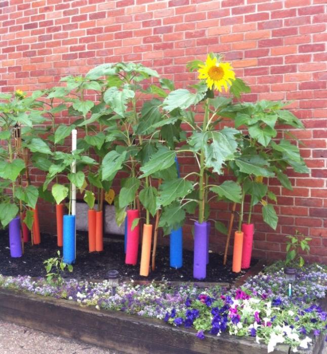 Нудлсы хорошо поддерживают растения и смотрятся привлекательно. /Фото: elitereaders.com