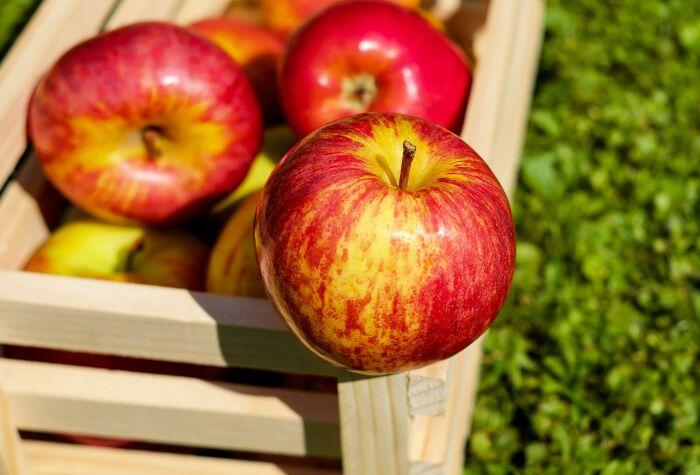 С зараженными плесенью апельсинами и мандаринами лучше не рисковать, а вот яблоко можно спасти. /Фото: i.pinimg.com