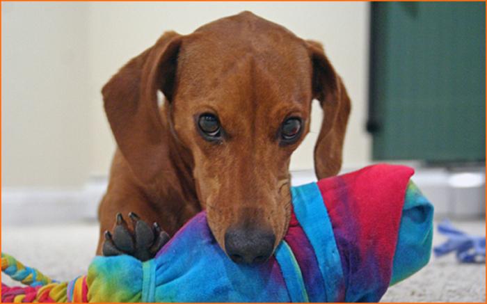 Отличная плетеная коса из старой простыни обязательно понравится домашнему питомцу. /Фото: dogschool.es