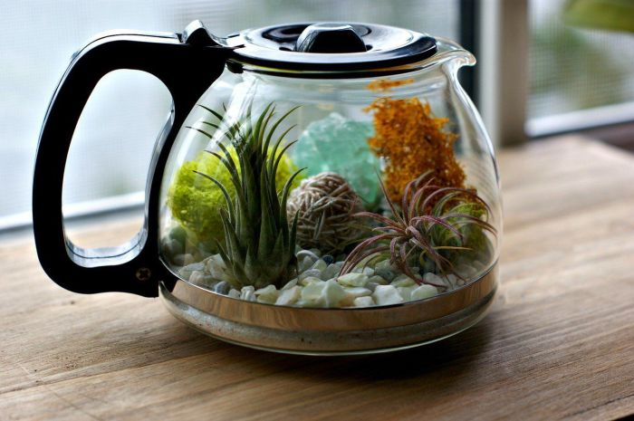 Необычный выбор сосуда для высадки мини-сада. /Фото: i.pinimg.com