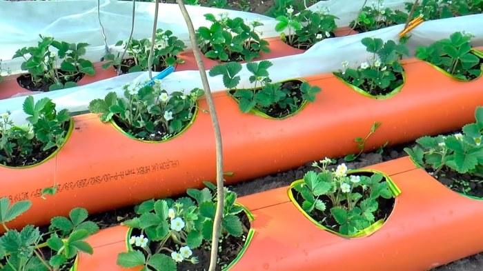 Горизонтальное расположение труб ПВХ с клубникой. /Фото: i.ytimg.com