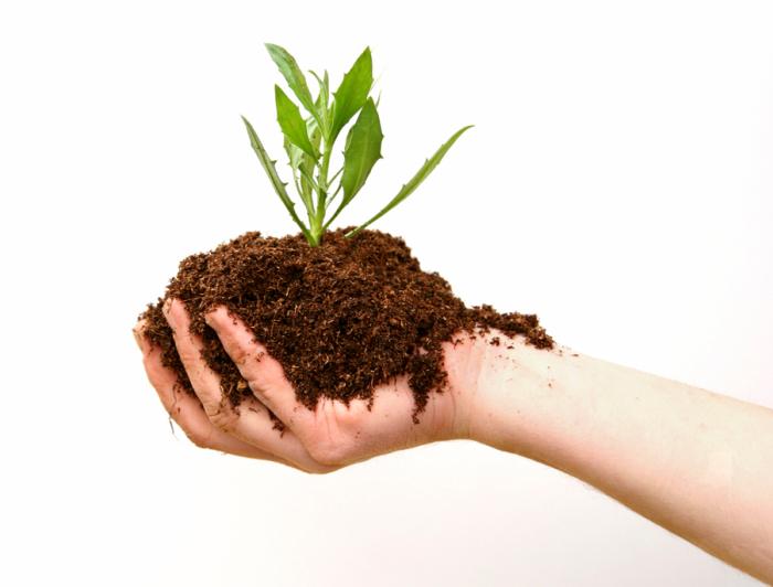 С секретным подходом любимые растения можно оставлять без полива даже на неделю. /Фото: 4.bp.blogspot.com
