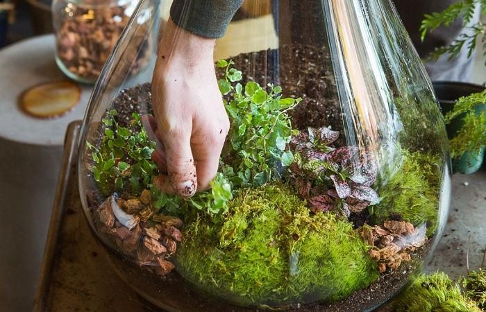 Мини-сад — красивое решение для украшения любой комнаты.