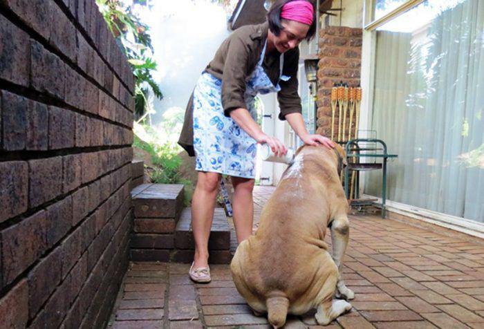 Все домашние животные любят, когда о них заботятся. /Фото: 4.404content.com