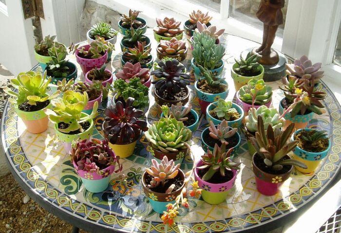 Эти растения отличаются стойкостью и неприхотливостью. /Фото: i.pinimg.com