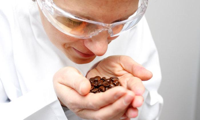 Букет аромата шоколада складывается из неожиданных компонентов. /Фото: d6prv7be4nrvy.cloudfront.net
