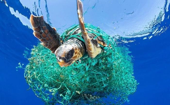 Морская черепаха, запутавшаяся в пластиковой сетке. /Фото: static.wixstatic.com