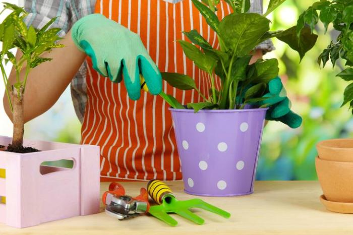 Ухоженные комнатные цветы — лучшее украшение любого интерьера. /Фото: i.wpimg.pl
