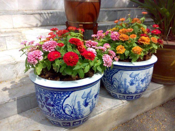 Слизнякам в нашем дворе не место! /Фото: getpotted.com