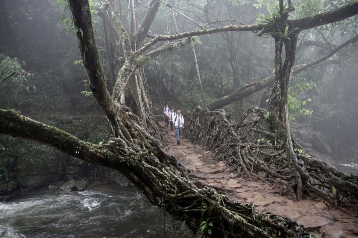 Живые мосты Индии идеальны для влажного климата. /Фото: tmssmagazine.com