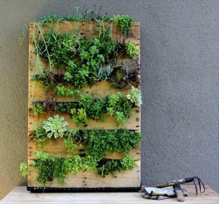 Вертикальный сад для дома: советы по изготовлению и красивые идеи для воплощения