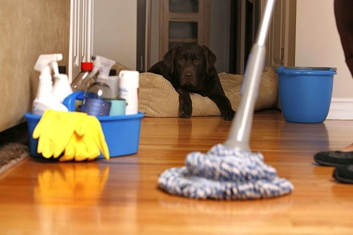 Очистить полы от органики помогут не хлорсодержащие средства, а энзимные. /Фото: shinycarpetcleaning.com