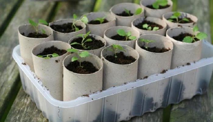 Пересаживать рассаду намного удобнее, если выращивать ее в горшочках, которые можно сразу поместить в землю. /Фото: d15vtfeorp4z6t.cloudfront.net