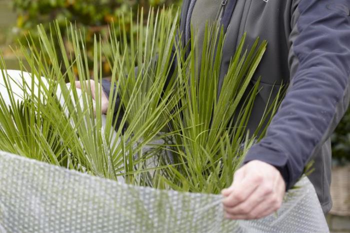 Пленка спасает нежные росточки от низкой температуры. /Фото: mein-schoener-garten.de