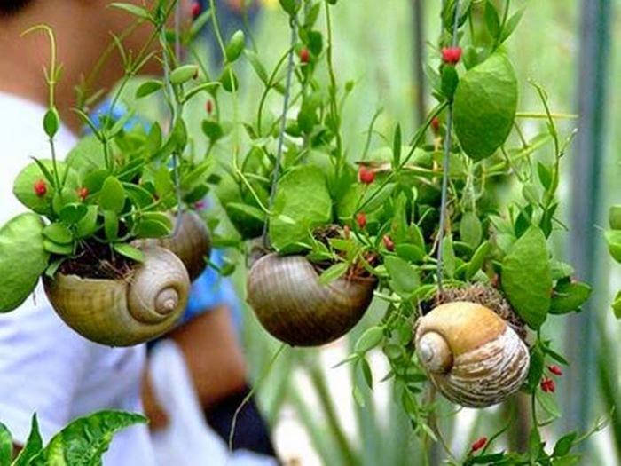 Мини-сад можно сделать даже в ракушках. /Фото: 3.bp.blogspot.com