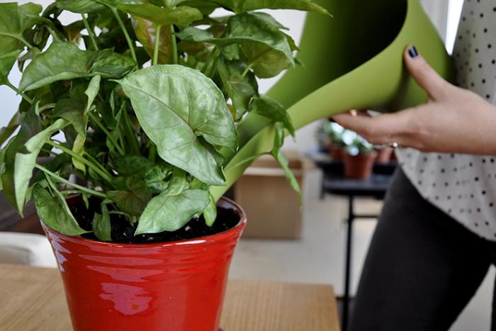 Живое пиво – неплохая подкормка для растений. /Фото: milliyetemlak.com