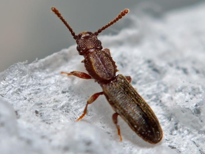 Если в муке появились долгоносики или другие насекомые, ее нужно немедленно выбросить. /Фото: justdoits.guru