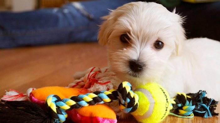 Собаки тоже различают цвета. /Фото: i.ytimg.com