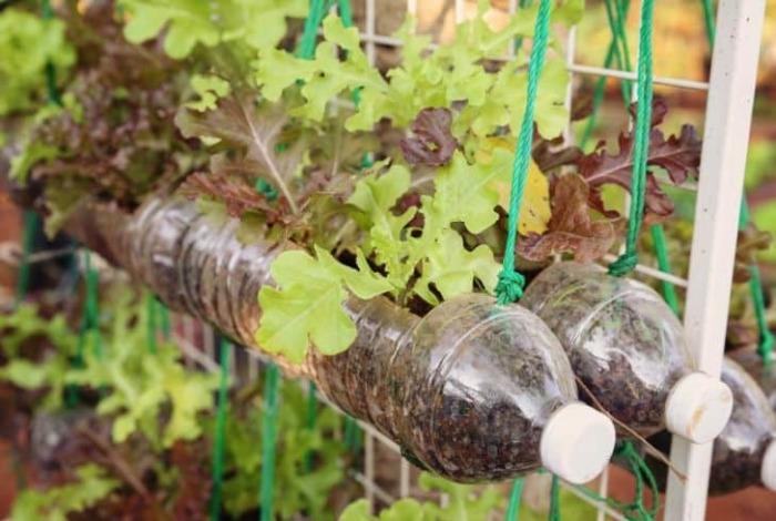 С помощью бутылок можно создать отличный цветник или мини-огород в любом месте. /Фото: conserve-energy-future.com